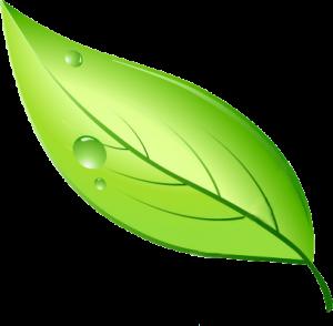 cascadian landscape logo leaf
